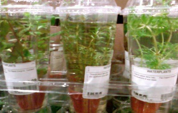 Водные растения в Икее