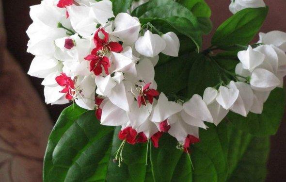 Домашние цветы в горшках