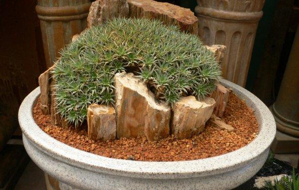 Суккулетны и кактусы в