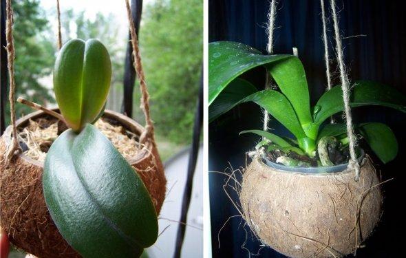 Подвесные кашпо для орхидей